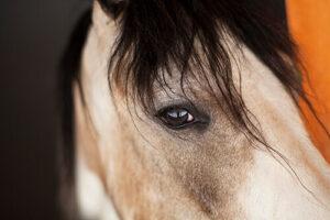 Cavalls Mas El Pla