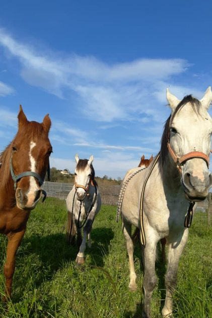 cavalls a la garrotxa